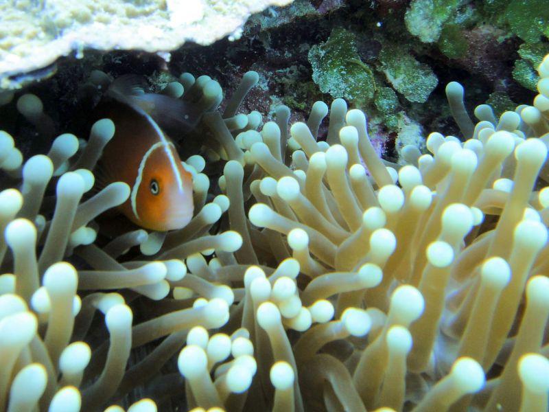 多彩繽紛珊瑚與熱帶魚群/Matt Kieffer@Flickr