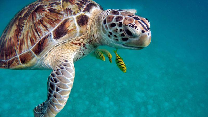 與海龜同游大海
