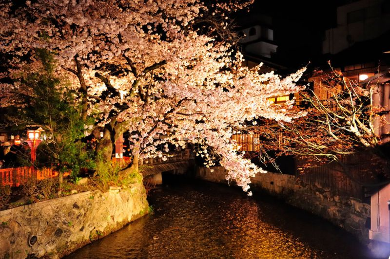 夜櫻(圖/kin@Flickr)
