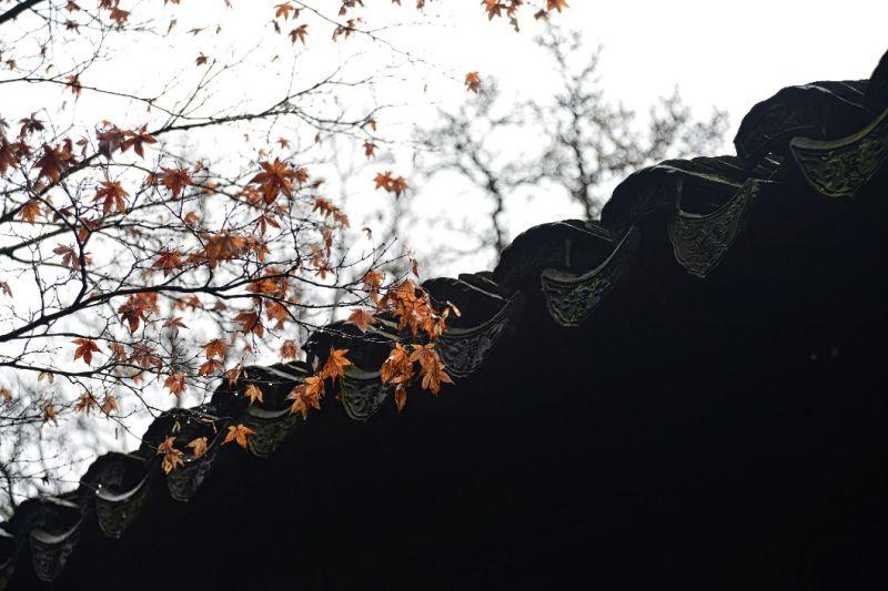 超级高清壁纸风景枫叶