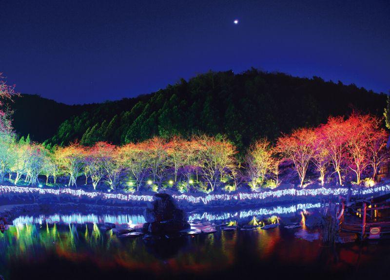 夜櫻(圖/九族文化村)