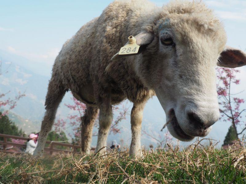 【一起旅行】跟著羊咩咩走過天空步道、挑戰人生的第一座百岳、騎過全球十大最美車道,一起走吧!