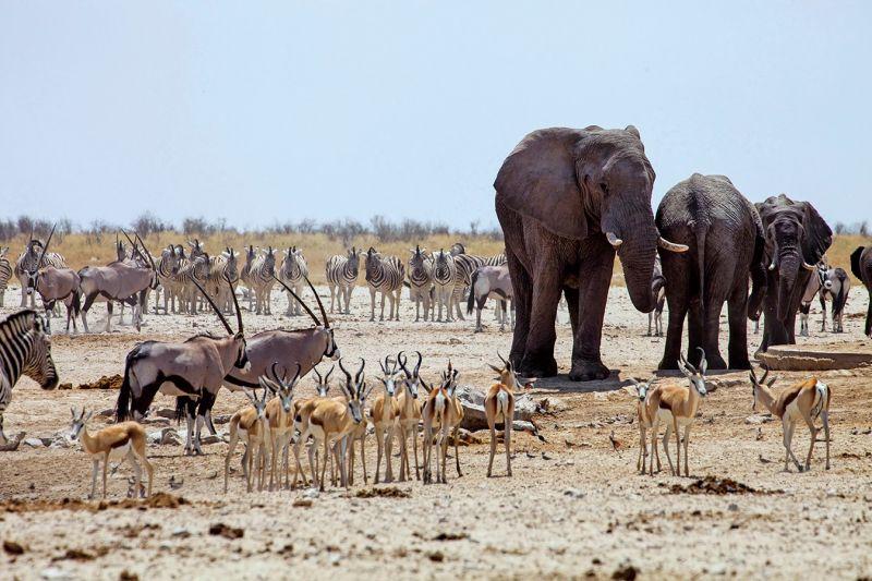 丘比國家公園裡的動物品種繁多,尤其早晨河岸旁都可看見動物們群聚於此。(圖片來源:shutterstock)
