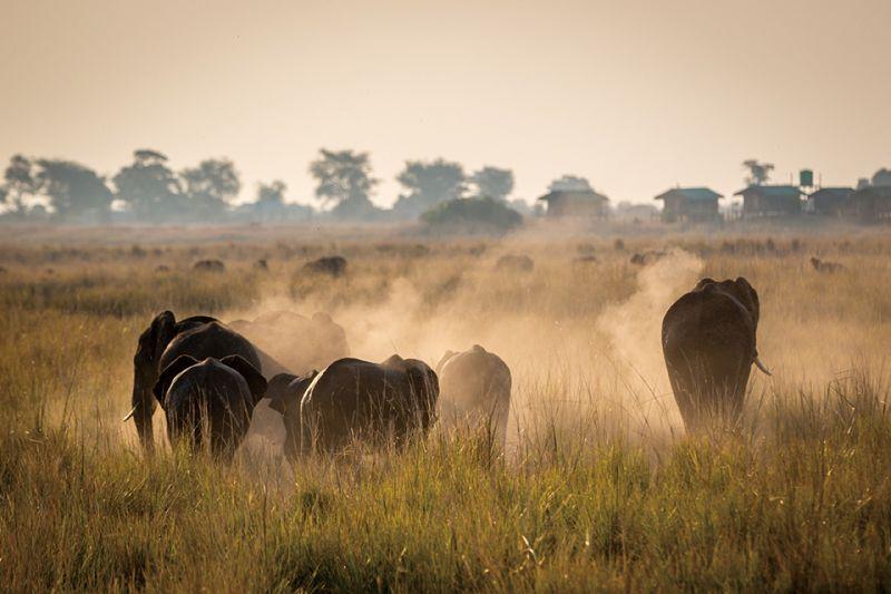 園區內擁有近7 萬頭大象,為整個非洲最多的地區。(圖片來源:shutterstock)