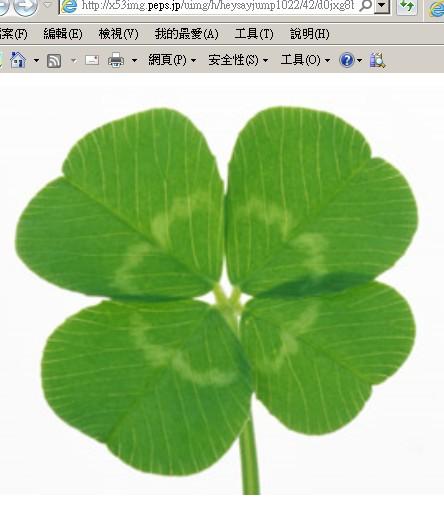 图片说明:四叶草代表好运.(翻摄自x53img.peps.jp)图片