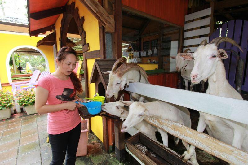 農場內能親近可愛動物,是小朋友最熱愛的行程之一。(欣傳媒攝影)