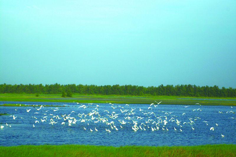 鰲鼓溼地是重要的候鳥棲息地,尤其秋冬鳥類生態豐富,值得細細觀察、瀏覽。(欣傳媒攝影)