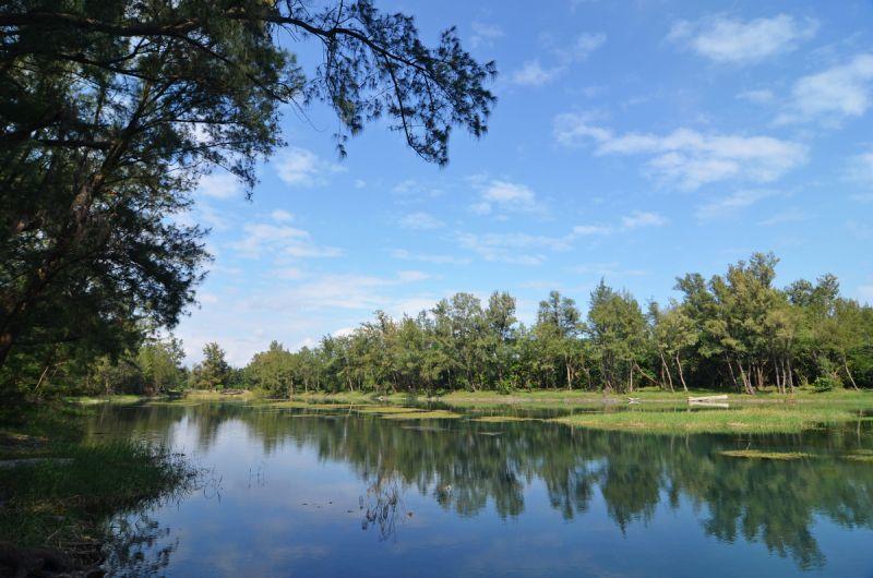 活水湖與黑森林交織出的風景,是台東著名景點之一。(劉宸嘉攝影)