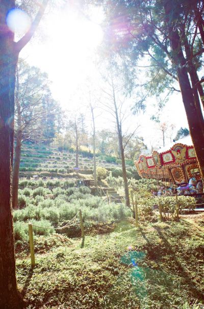 薰衣草森林以不同的角度詮釋森林,相較於美術館內蒐藏的大師名作,森林其實就是一座無牆美術館/圖 2017大地螢光藝術季 活動官方提供