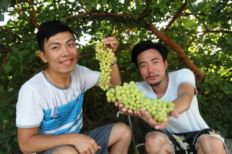 吐魯番不但葡萄種類多,吃起來清甜又帶香檳味。(攝影 劉士銘)