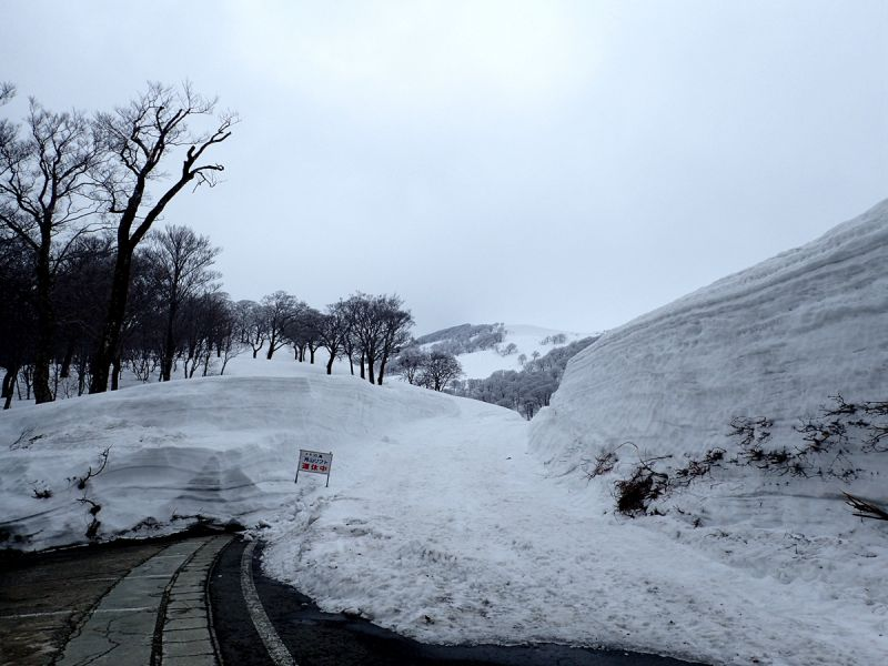 月山渡假山莊旁 往雪場的小徑(娜塔蝦 攝)