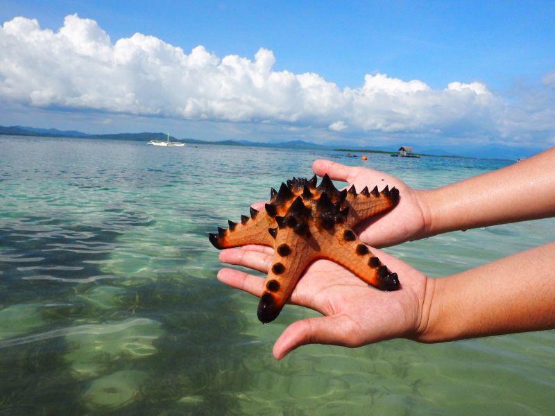 巴拉望-海星島