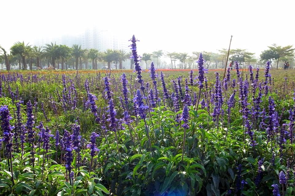 「凹仔底森林公園」盛開許多美麗的花朵,是放鬆身心的好去處。(Flickr授權作者-athenakuo)