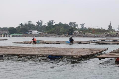 吃過蚵,有沒有看過蚵棚哩?這是台南安平式的浮棚。