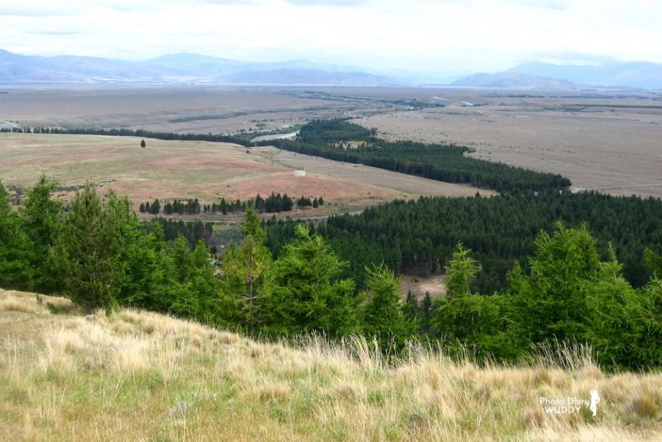 爬升到了半山腰(海拔920公尺),走出了山腳下的松樹林,林相轉為開闊的短草坡。