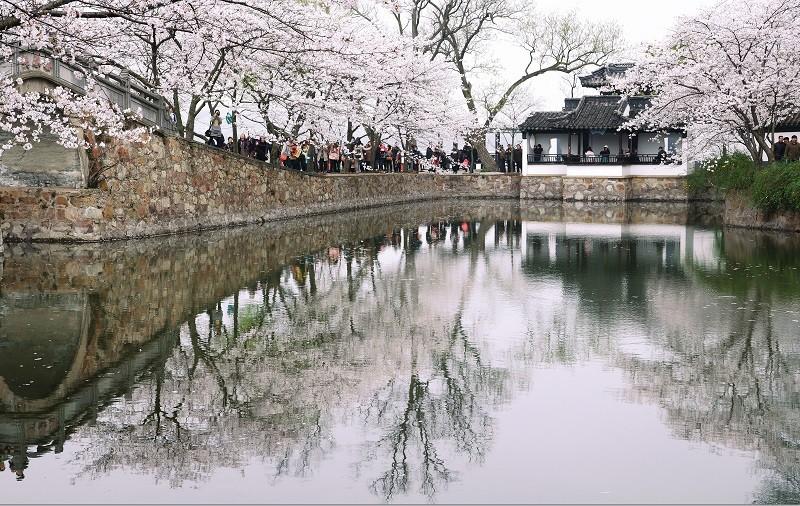 無錫最早櫻花的栽種地—黿頭渚公園,櫻花 與湖水、建築交相輝映的美景也吸引許多攝 影玩家造訪。(雄獅旅遊提供)
