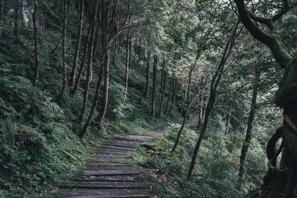 宜蘭大同   馬告生態園區 X 慢行神木園,不需要翻山越嶺的台灣秘境