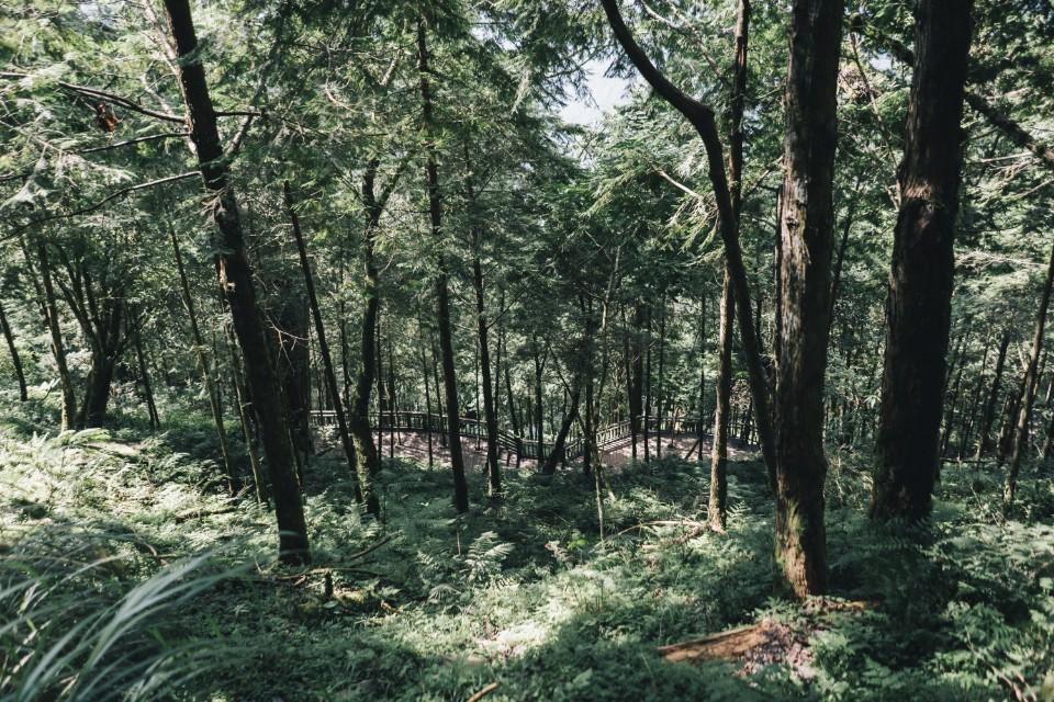 宜蘭 大同 神木園