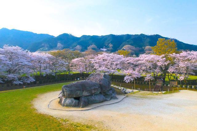 石舞台櫻花
