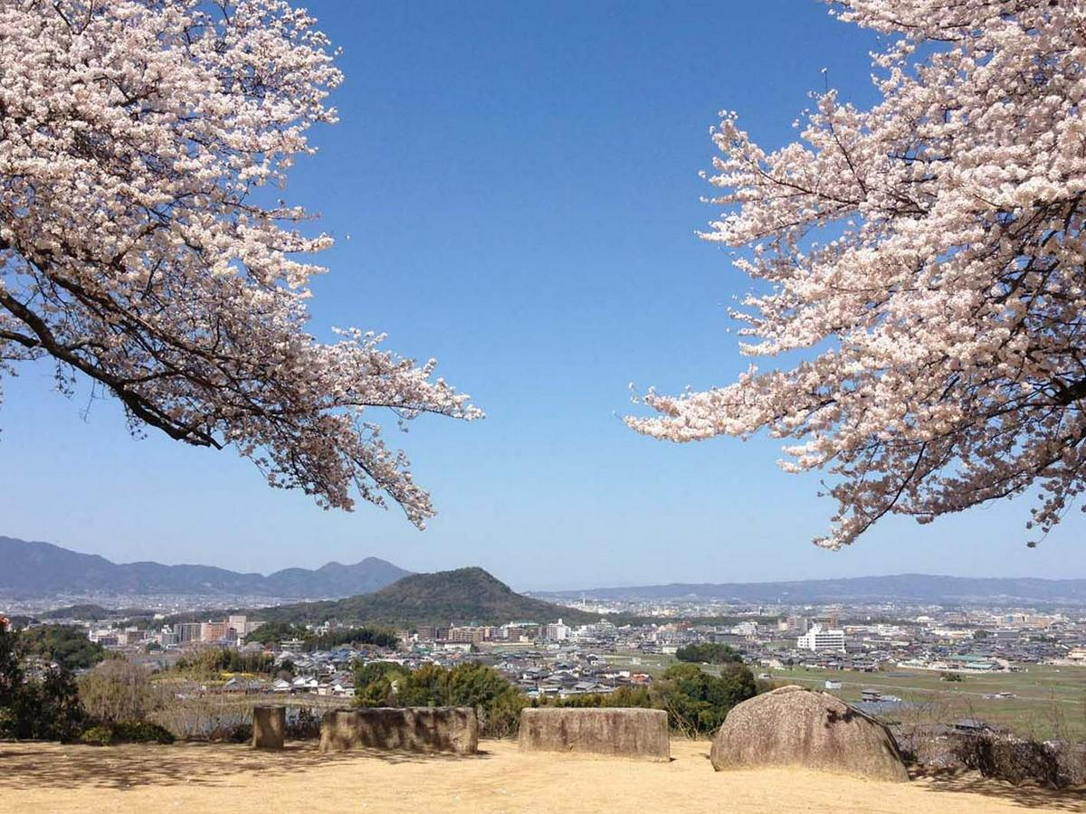 甘樫丘展望台櫻花