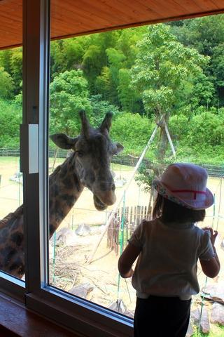 德島動物園-四國最大動物園