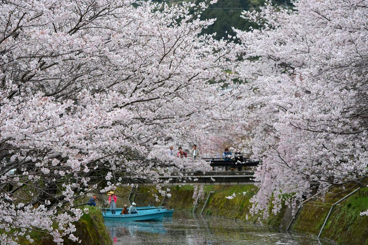 德島勝浦生名櫻花祭