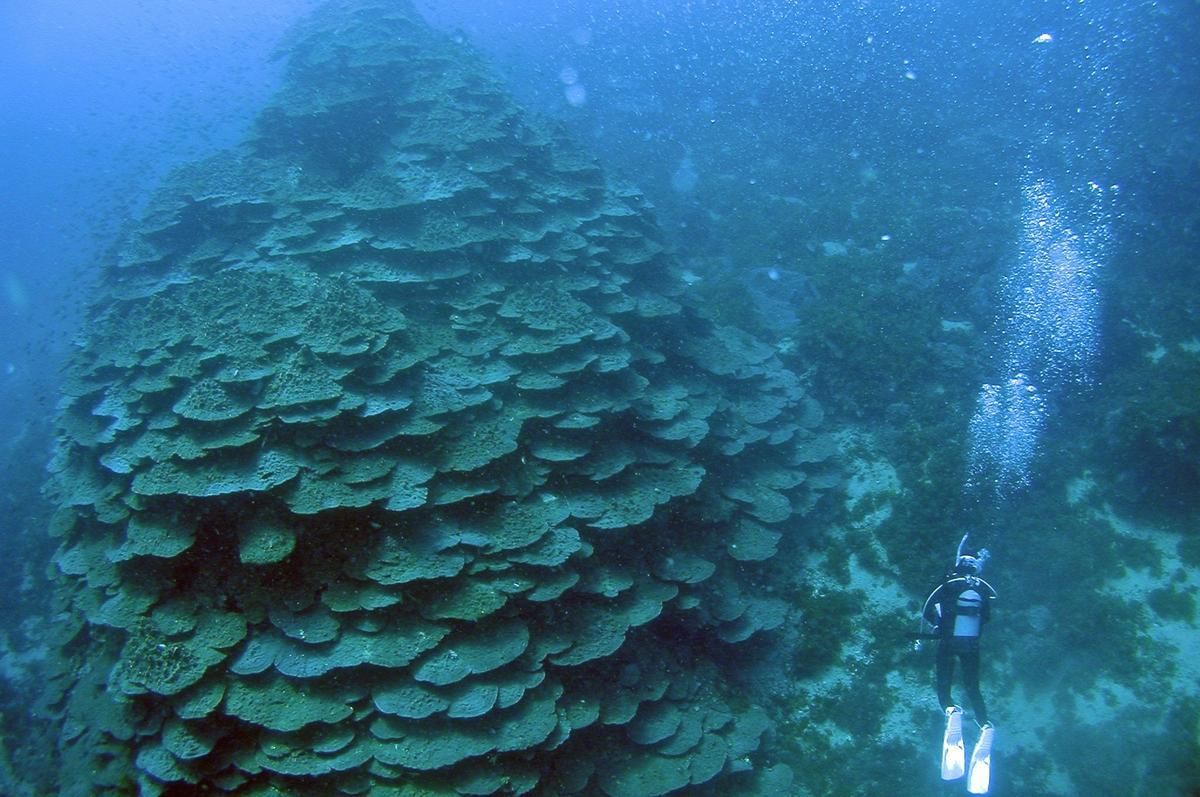 德島縣竹島海中公園千年珊瑚