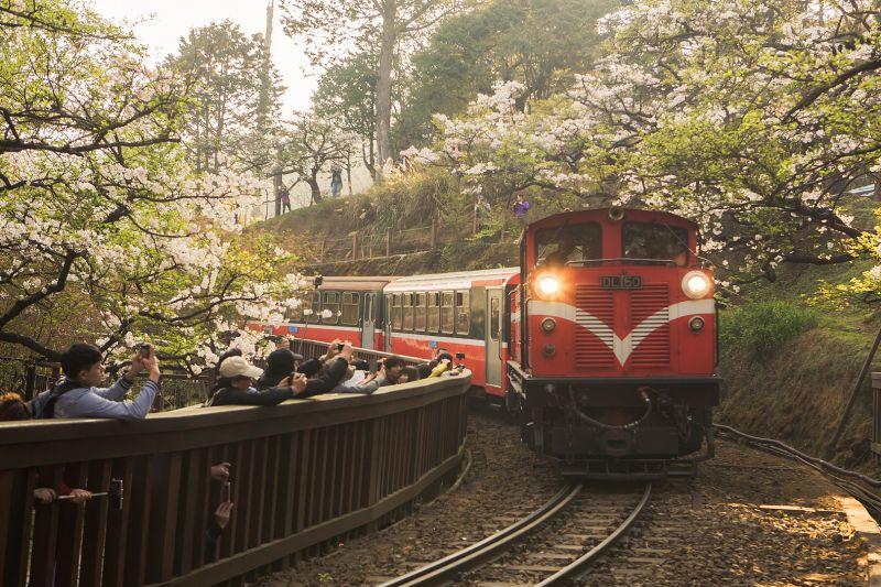S彎道櫻花火車  圖攝/哈米貓