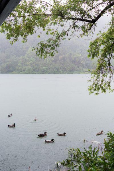 梅花湖晴雨皆美,四邊還有不少攤販,提供飲食、咖啡座休憩。(攝影欣傳媒)