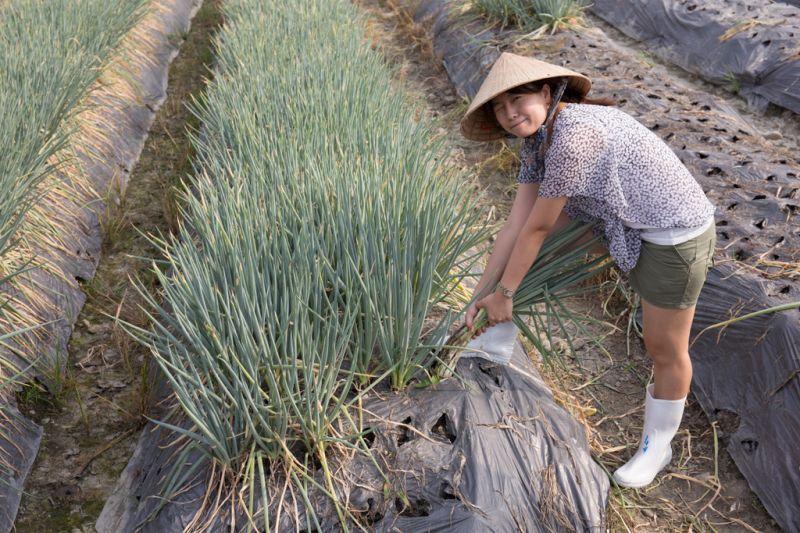 宜蘭三星的蔥白長,其實秘密就藏在田裡。(攝影蘇國輝)