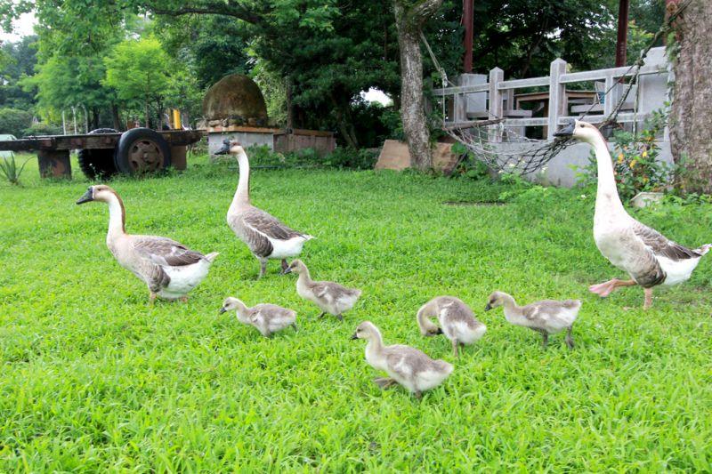 小而美的宜農牧場,有許多可愛動物陪伴大家。(攝影陳德偉)
