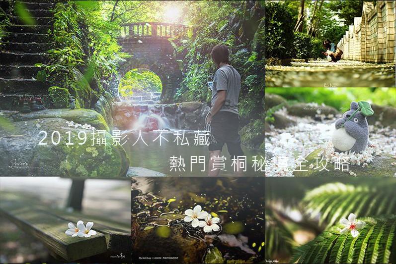 2019全台桐花季 熱門賞桐秘境全攻略(05/08更新)-欣攝影-欣傳媒攝影頻道