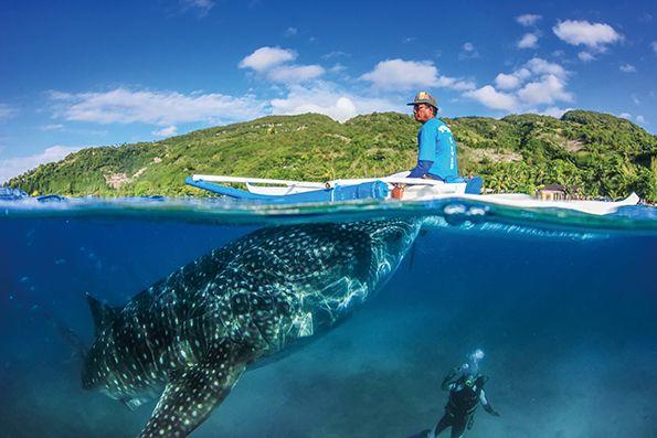 歐斯陸鯨鯊