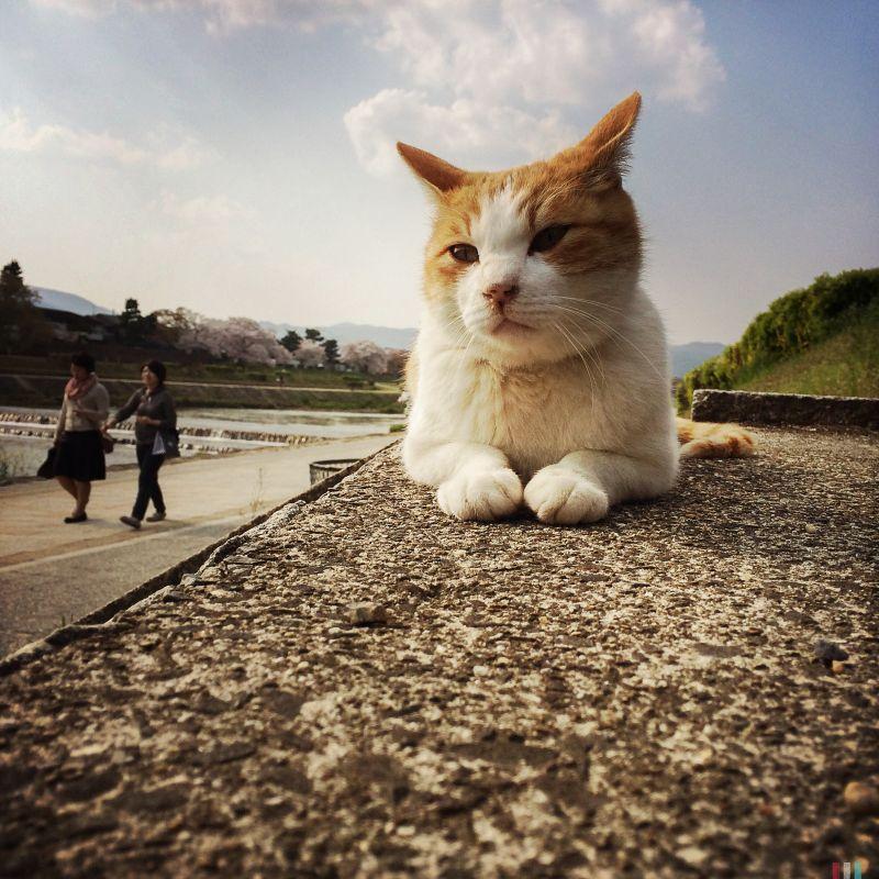 遇到不怕人的貓時最好拍,但建議一定要低於貓的視線,不但不會嚇跑貓咪,還會讓貓的樣貌更具親和力。圖/ 阿默mookio 提供