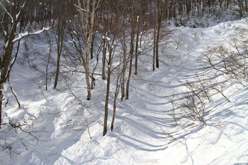 令人心動的樹林。(photo by 阿福)