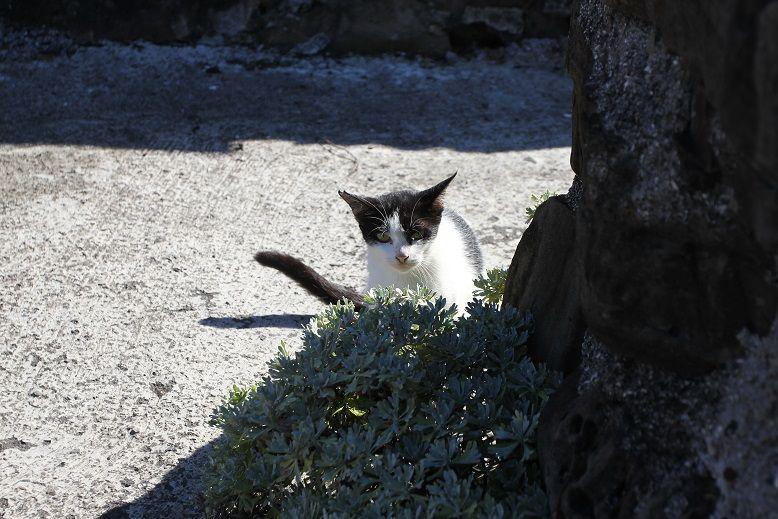 喵~馬崗漁村有三十多隻野貓,傍晚可看到牠們可愛身影。(盧育君攝影)