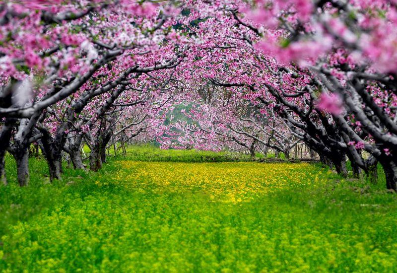 遼寧河口桃花,美麗如畫。