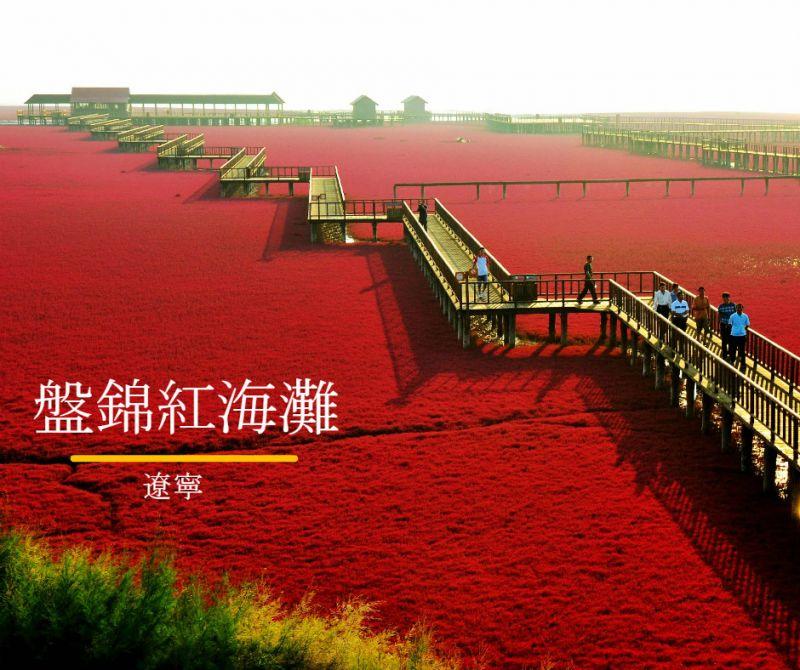 盤錦的秋紅超特別,各國電視台都常來拍攝報導。